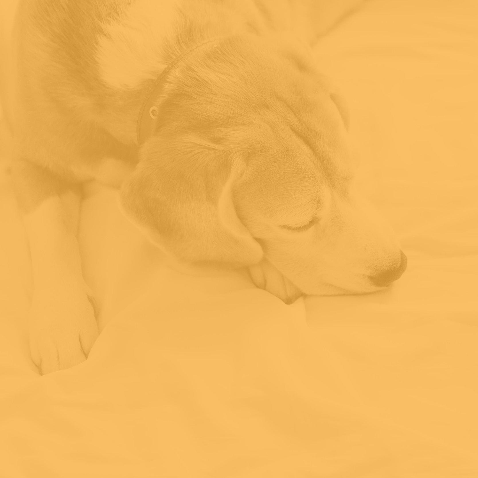 GATEWAY - FOR Veterinary CLINICS -