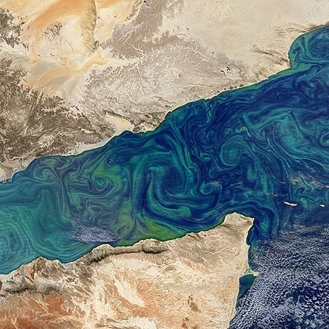 Satellite images of phytoplankton blooms on the surface of the ocean often dazzle with their diverse colors, shades and shapes. But phytoplankton are more than just nature's watercolors: They play a key role in Earth's climate by removing heat-trapping carbon dioxide from the atmosphere through photosynthesis. - Yet a detailed account of what becomes of that carbon — how much of it goes where within the Earth and for how long — has beset scientists for decades. So while NASA's Earth-observing satellites can detect the proliferation and location of these organisms, the precise implications of their life and death cycles on the climate are still unknown. - via @nasaclimatechange