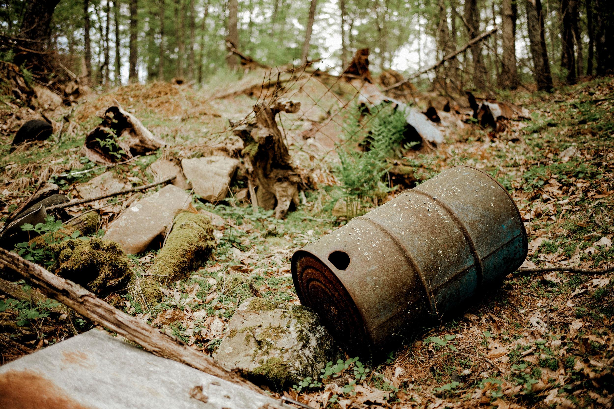 kw-forest-findings-img2.jpg