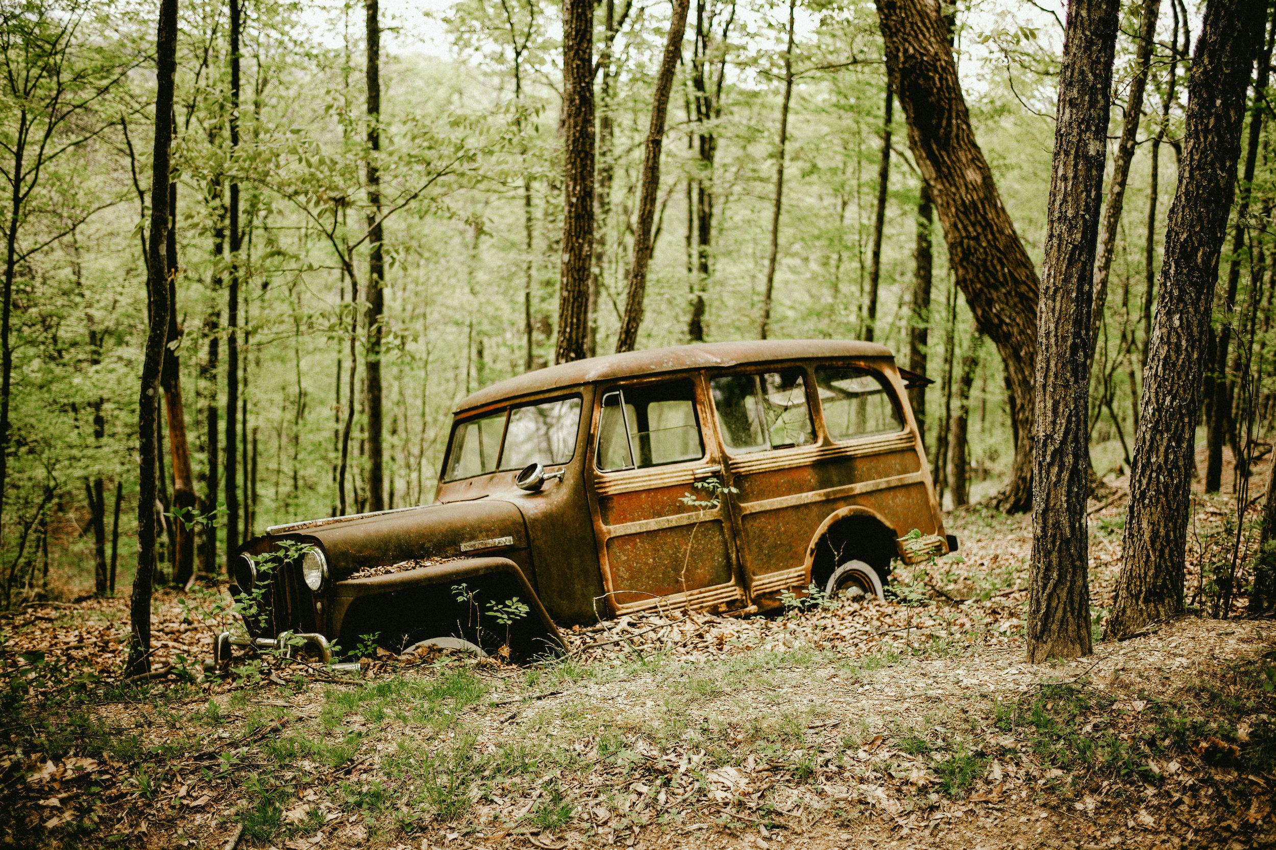 kw-forest-findings-img3.jpg