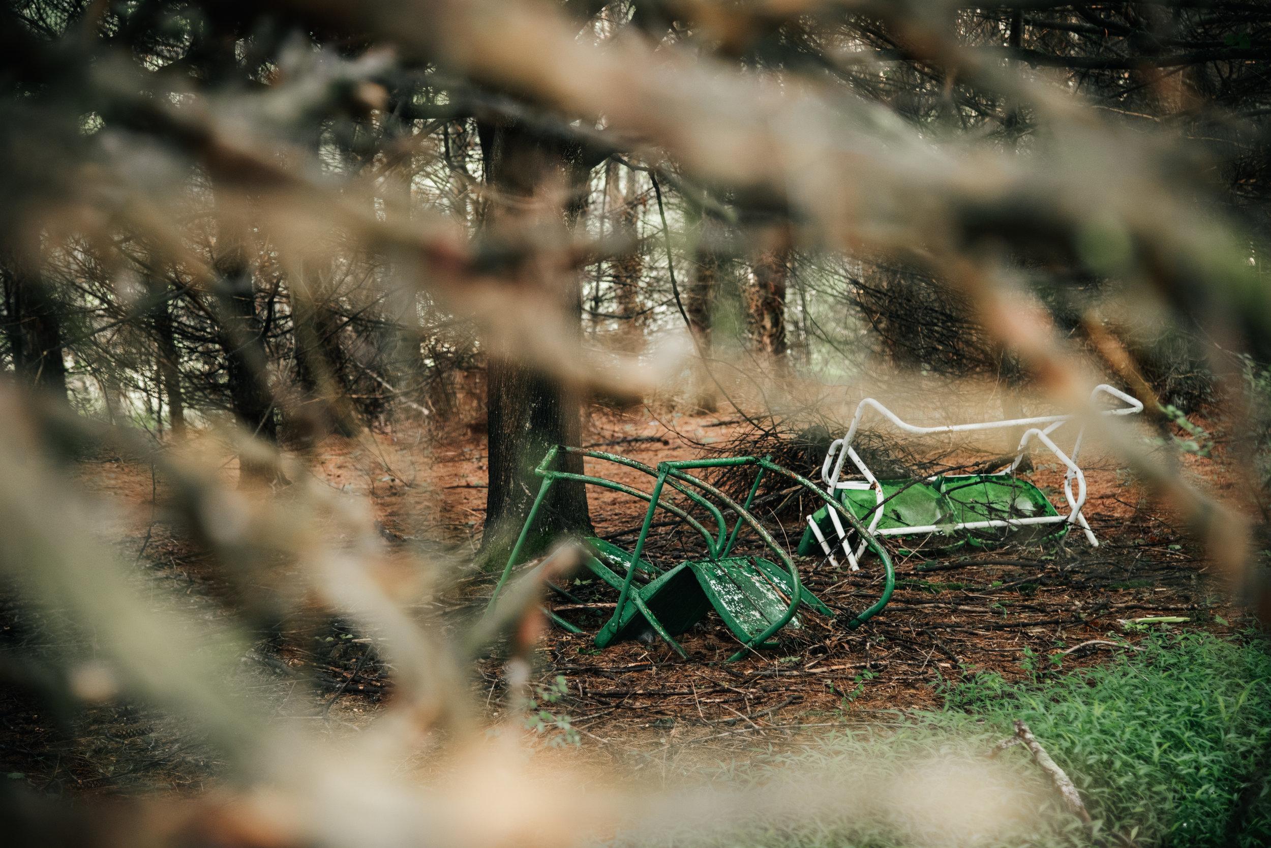 kw-forest-findings-vol2-img9.jpg