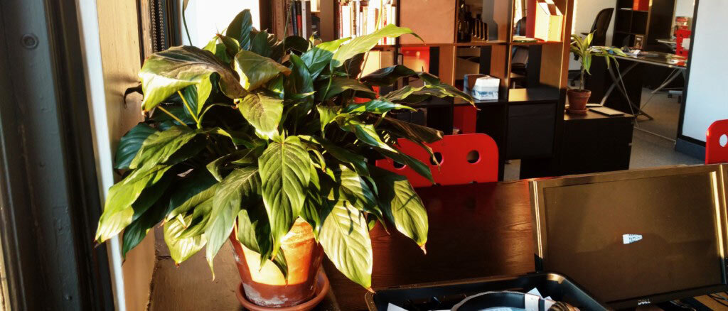 Beautify your space by going green