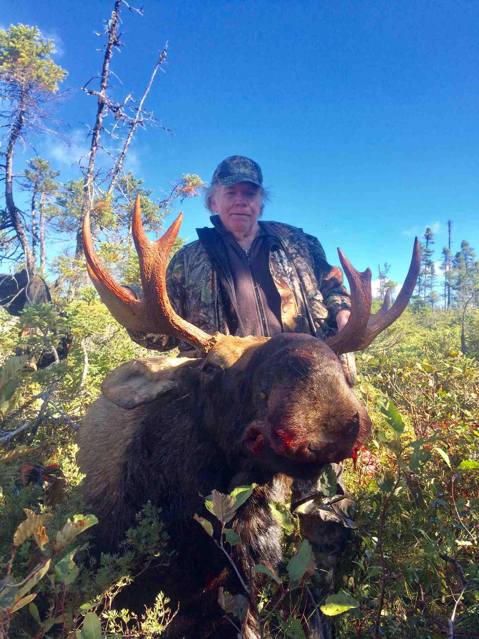 Moose 10.jpg