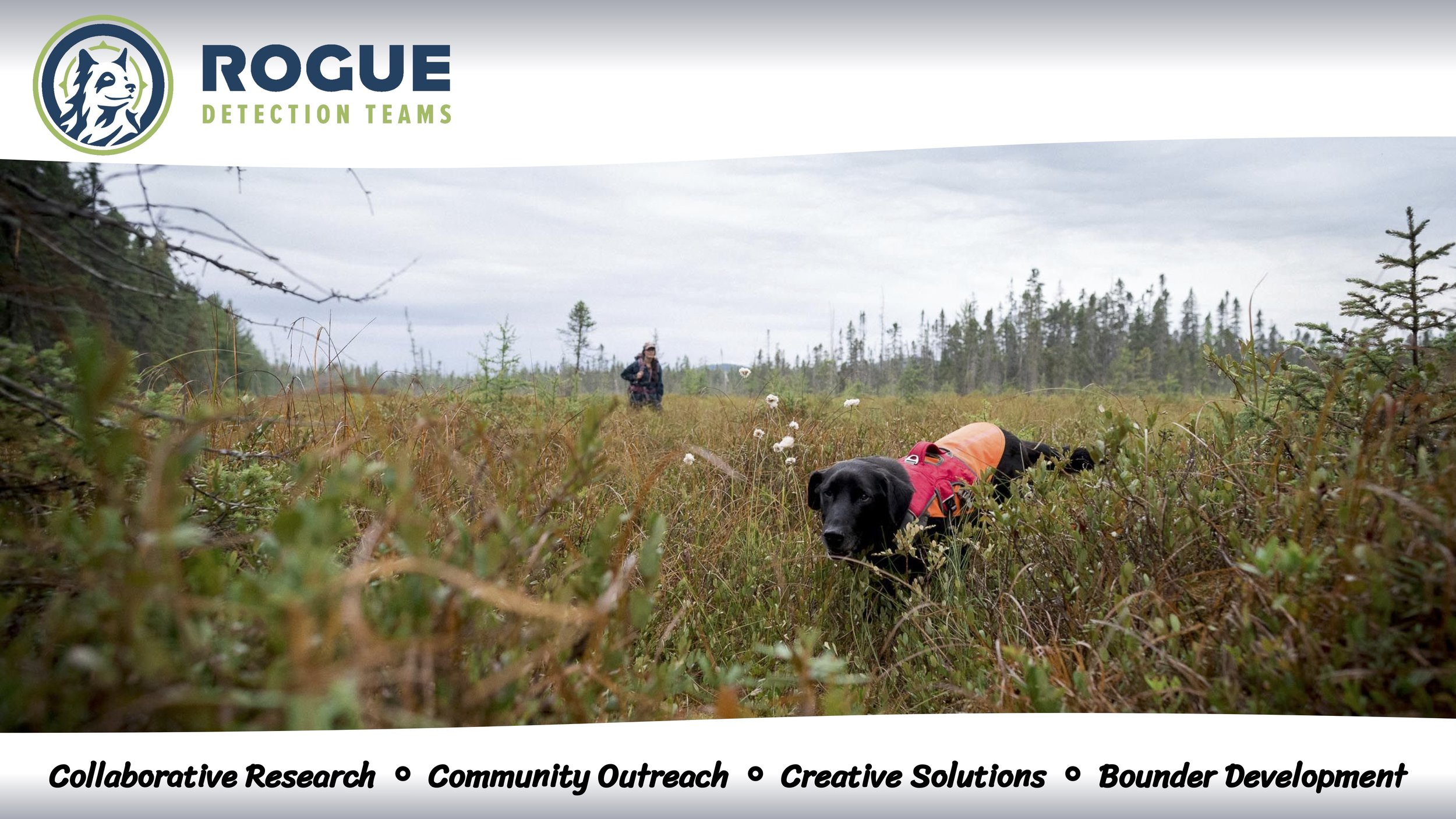 The Rogue eBook - Our eBook has detailed information on the services we provide, in a downloadable format easy to share. Please feel free to download, email, print, and share in any way you see fit!