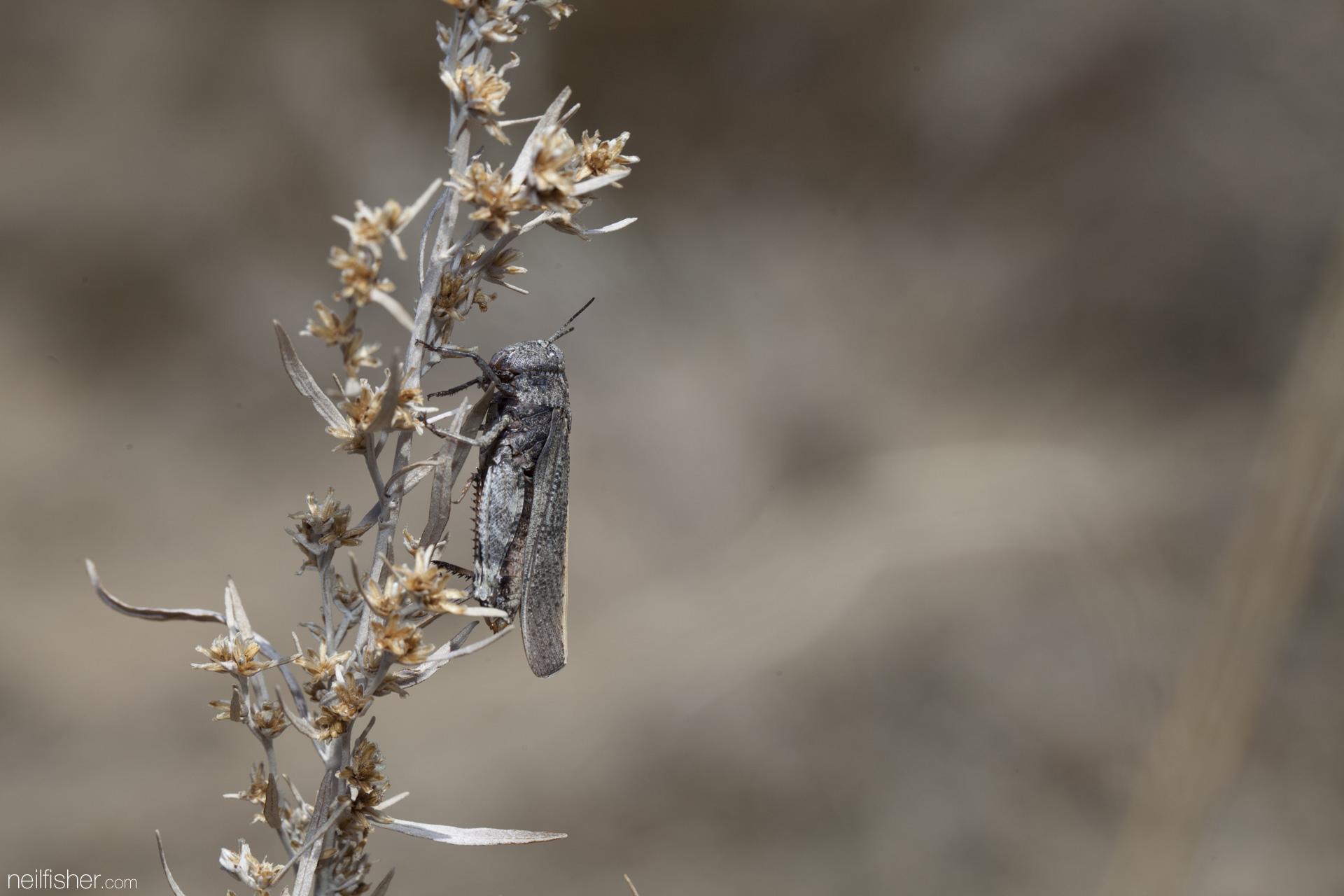 20140429 - Grasshopper - NeilFisher.jpg