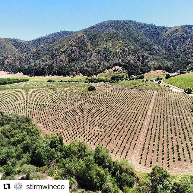 Repost from @stirmwineco 💥 ・・・ The Gabilan Mountains and a sea of old vine Riesling bathing in the June sun. Just your average limestone swampland. #cienegavalley