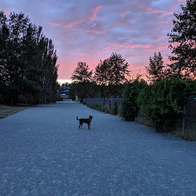 No need for a filter on this gorgeous Seattle sunset. 😍🌇 #seattlerescuedogs #dogpark #dogparksunset