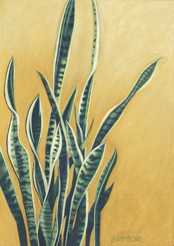 """Tangled Sansevieria""  Soft pastel on board. 48 x 68cm. Unframed original.  Archival prints available ."