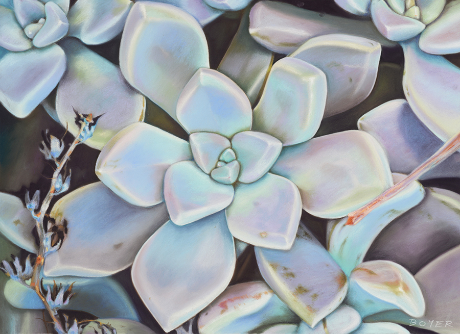"""""""Wild Succulents""""  Soft pastel on board. 72x52cm. Framed original.  Archival prints available ."""