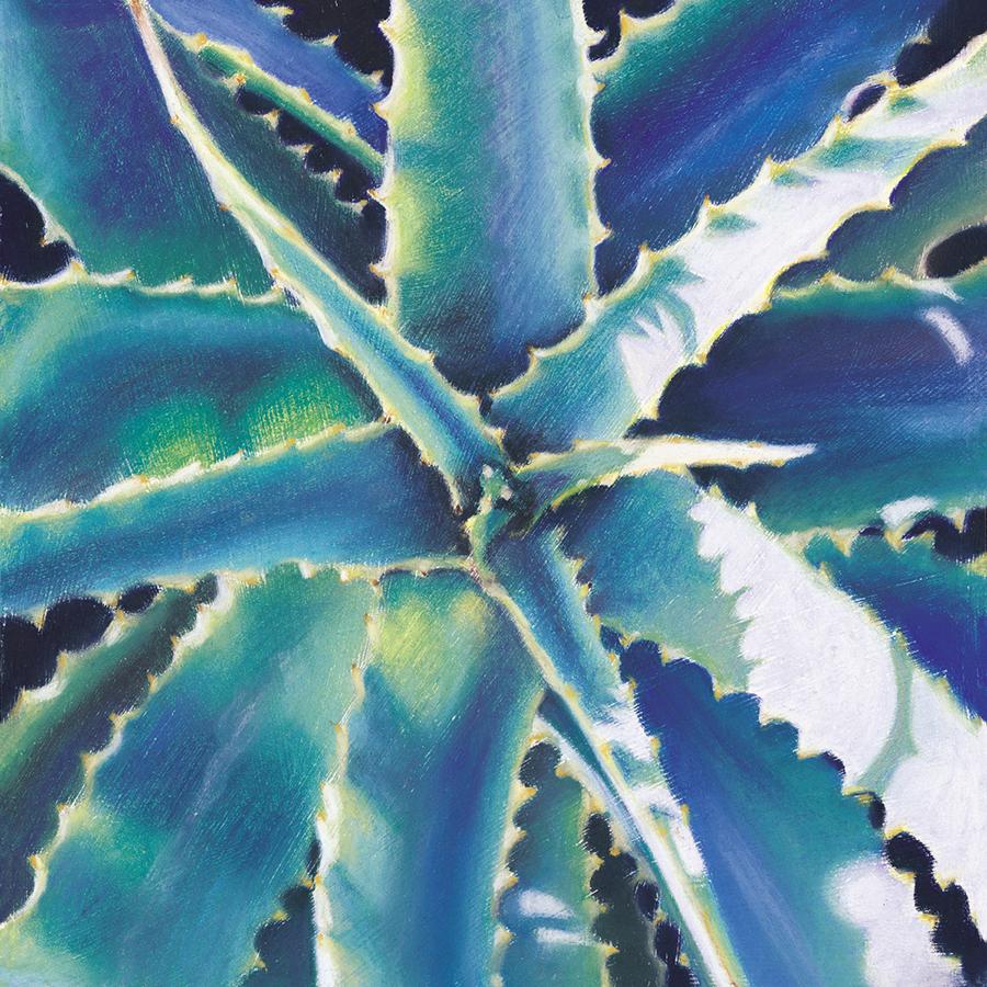 """Dune Aloe""  Soft pastel on board. 30x30cm. Unframed original.  Archival prints available ."
