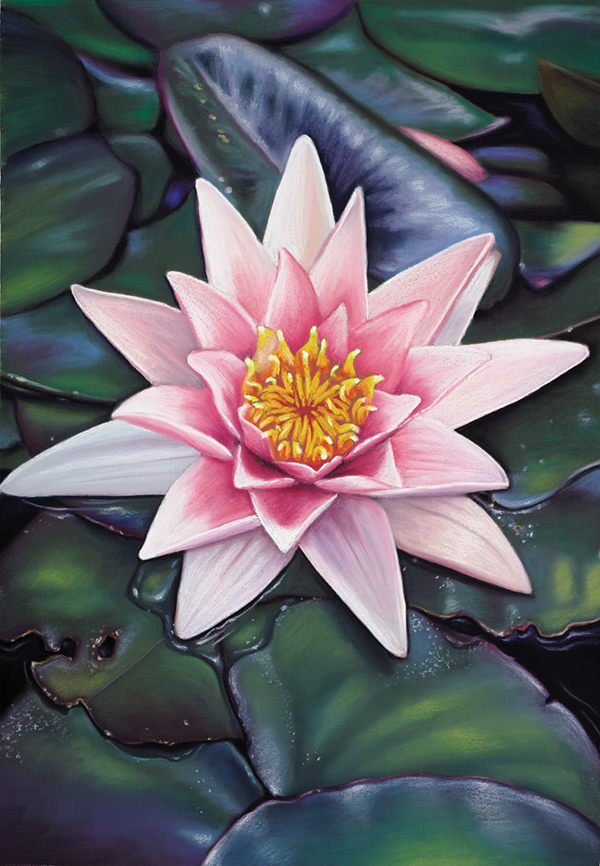 """""""Pink Waterlily""""  Soft pastel on board. 52x72cm. SOLD.  Archival prints available ."""