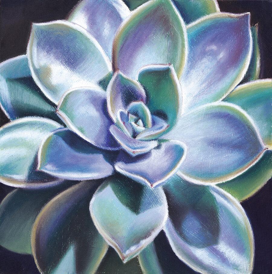 """Succulent""  Soft pastel on board. 30x30cm. Unframed original.  Archival prints available ."