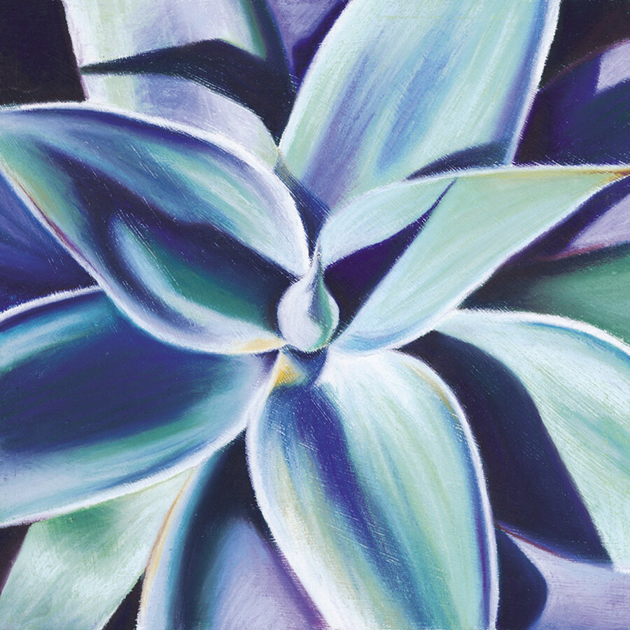 """""""Agave""""  Soft pastel on board. 30x30cm. Unframed original.  Archival prints available ."""