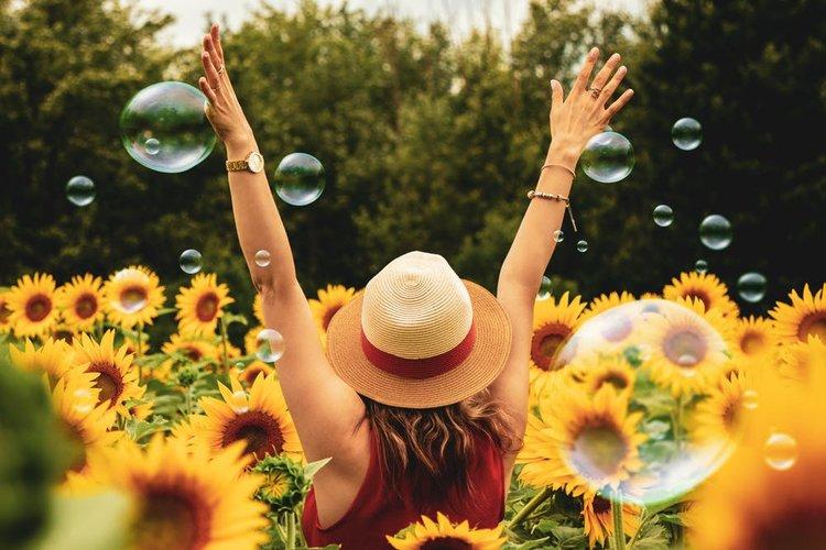 summer-sunflower.jpeg