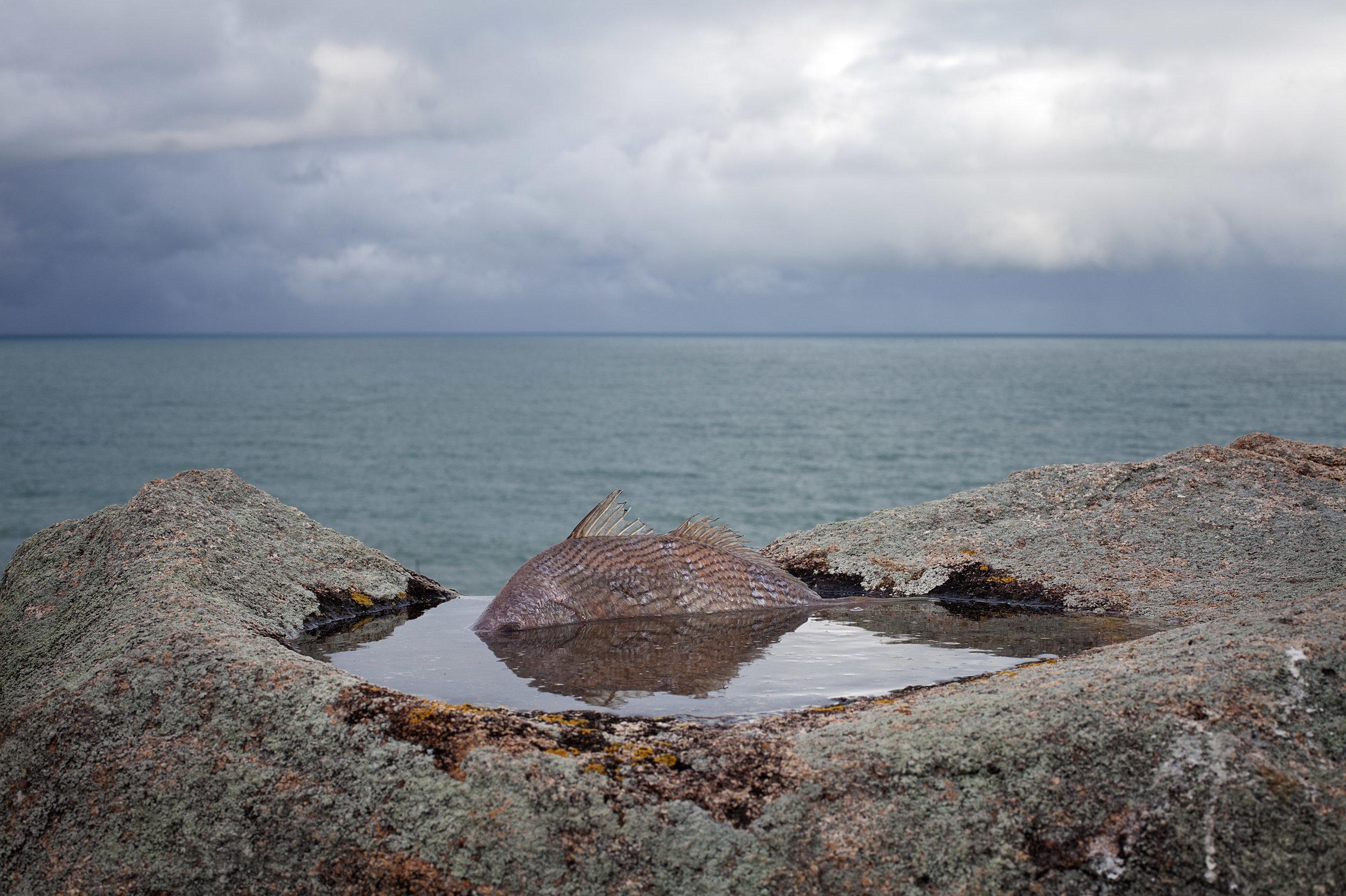 Image : Rodrigo Braga, Sea Island , 2013, photographie 80 x 120 cm.© Rodrigo Braga