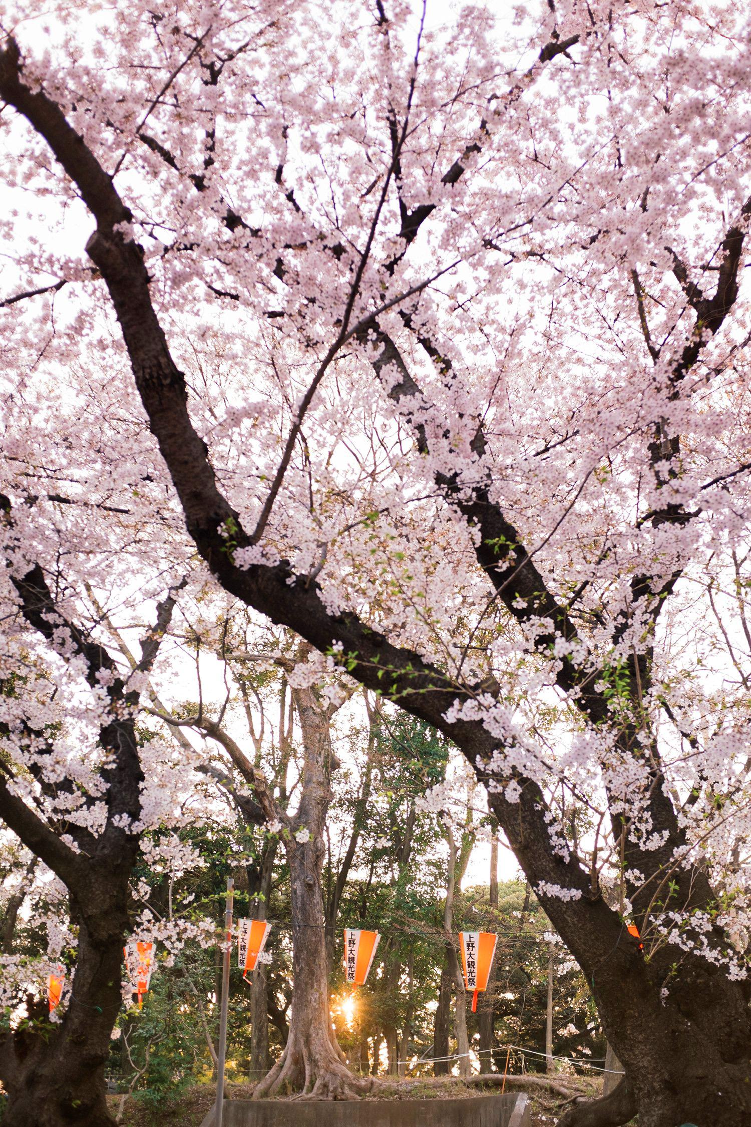 Japan 1196.jpg
