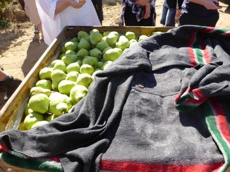 170310.packhams.blankets.448.jpg