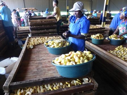 170310.pear.prepping.448.jpg