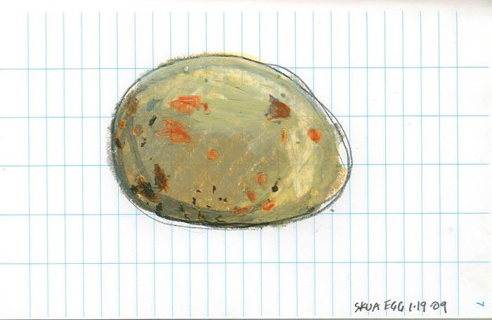 skua egg