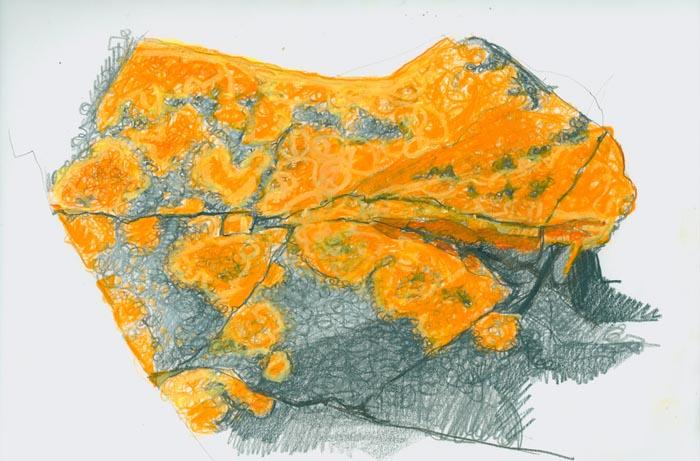 untitled (lichen)