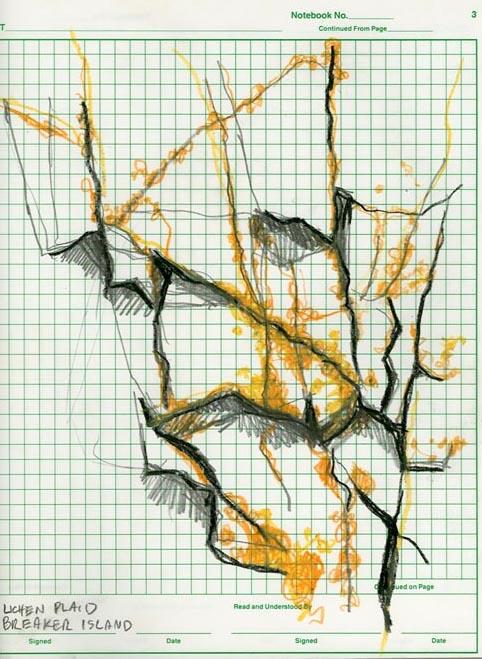 lichen plaid
