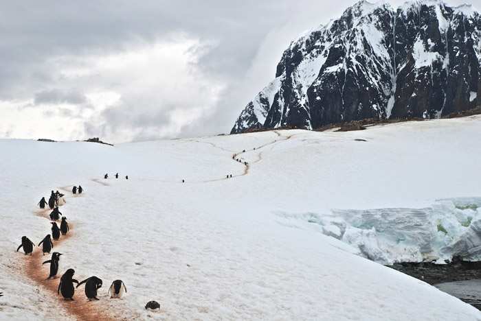Highly Commended:  Gentoo Trail