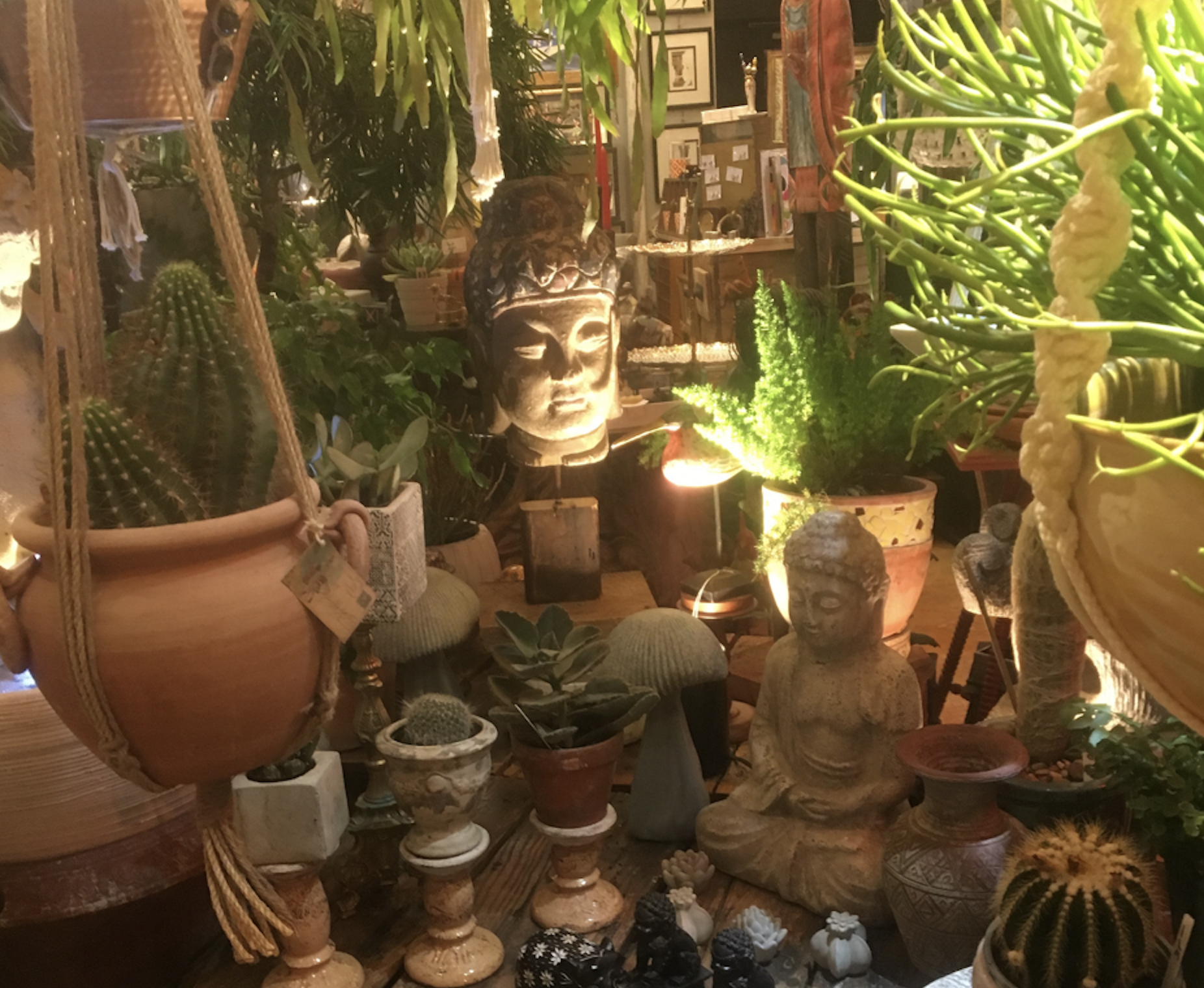 Houseplants & garden accessories -