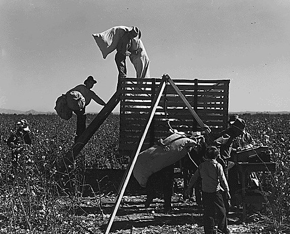cotton pickers.jpg