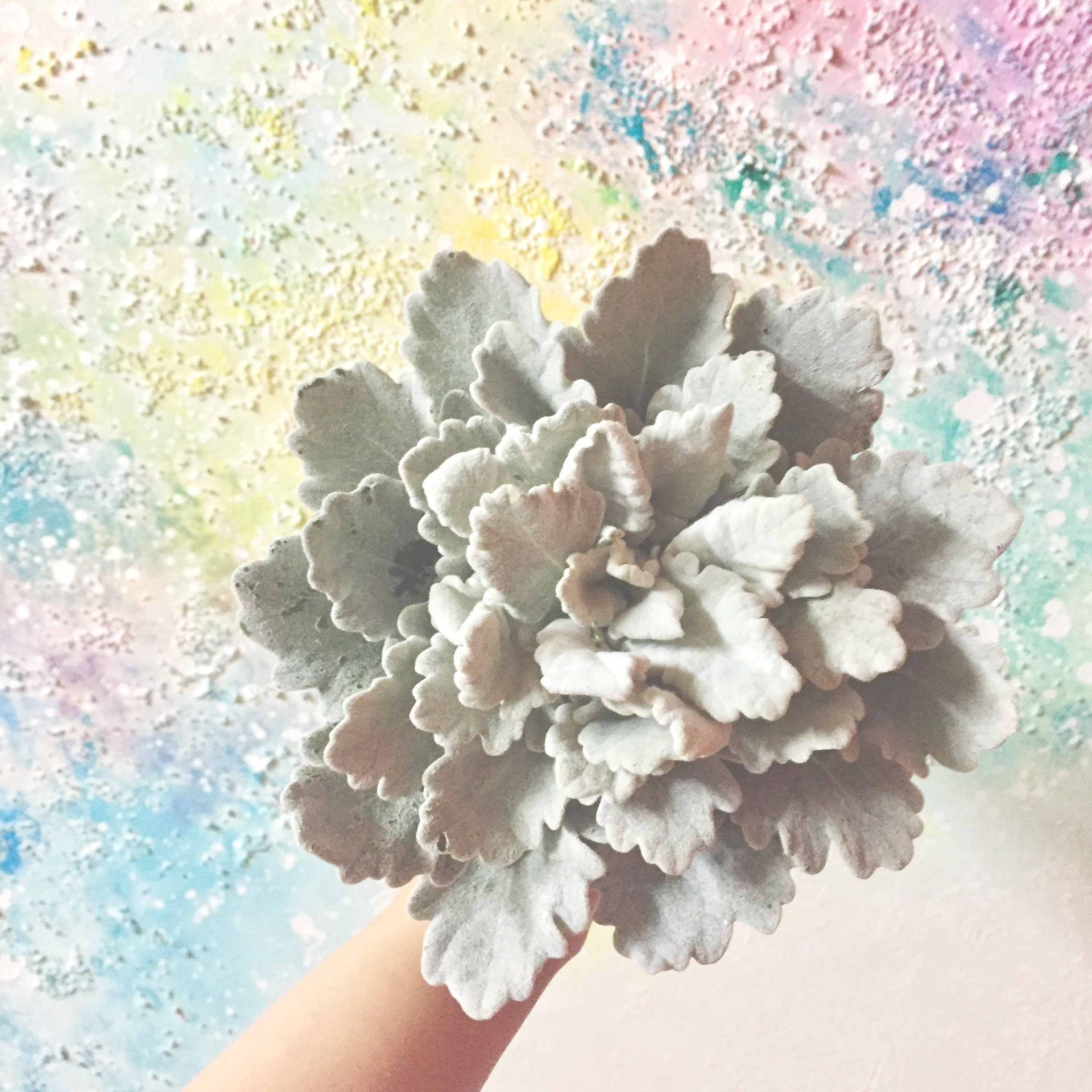 composite bouquet, made of only dusty miller by wiring technique