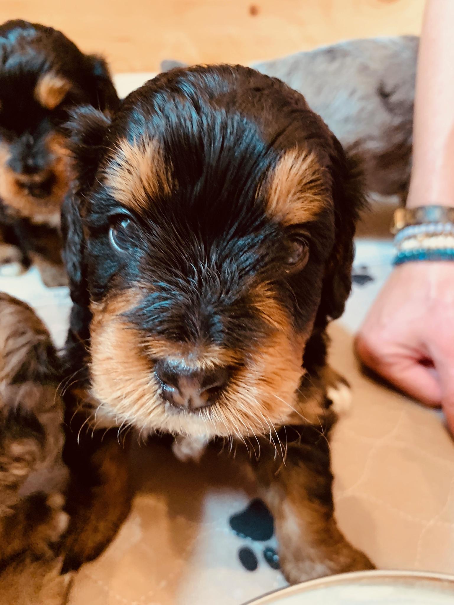 new puppy 3.jpg