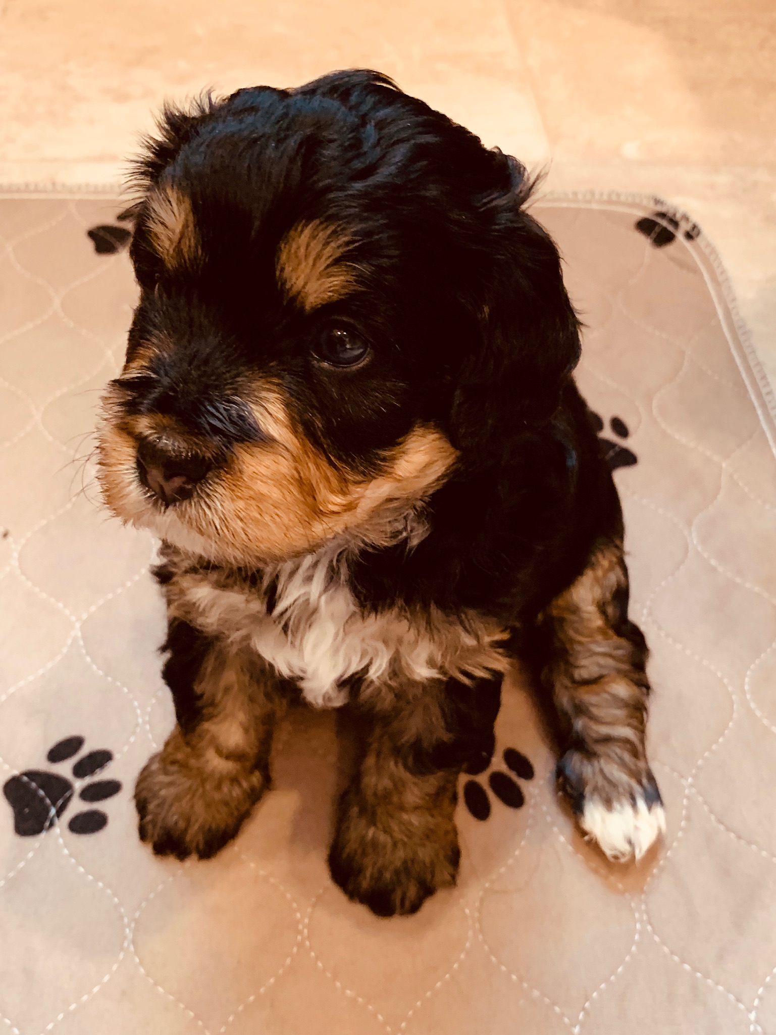 new puppy 4.jpg