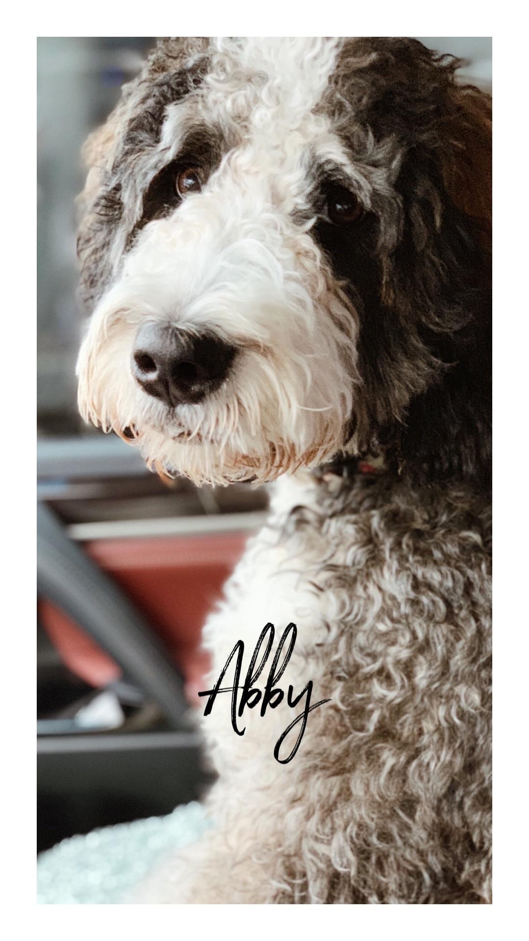 Abby .JPG