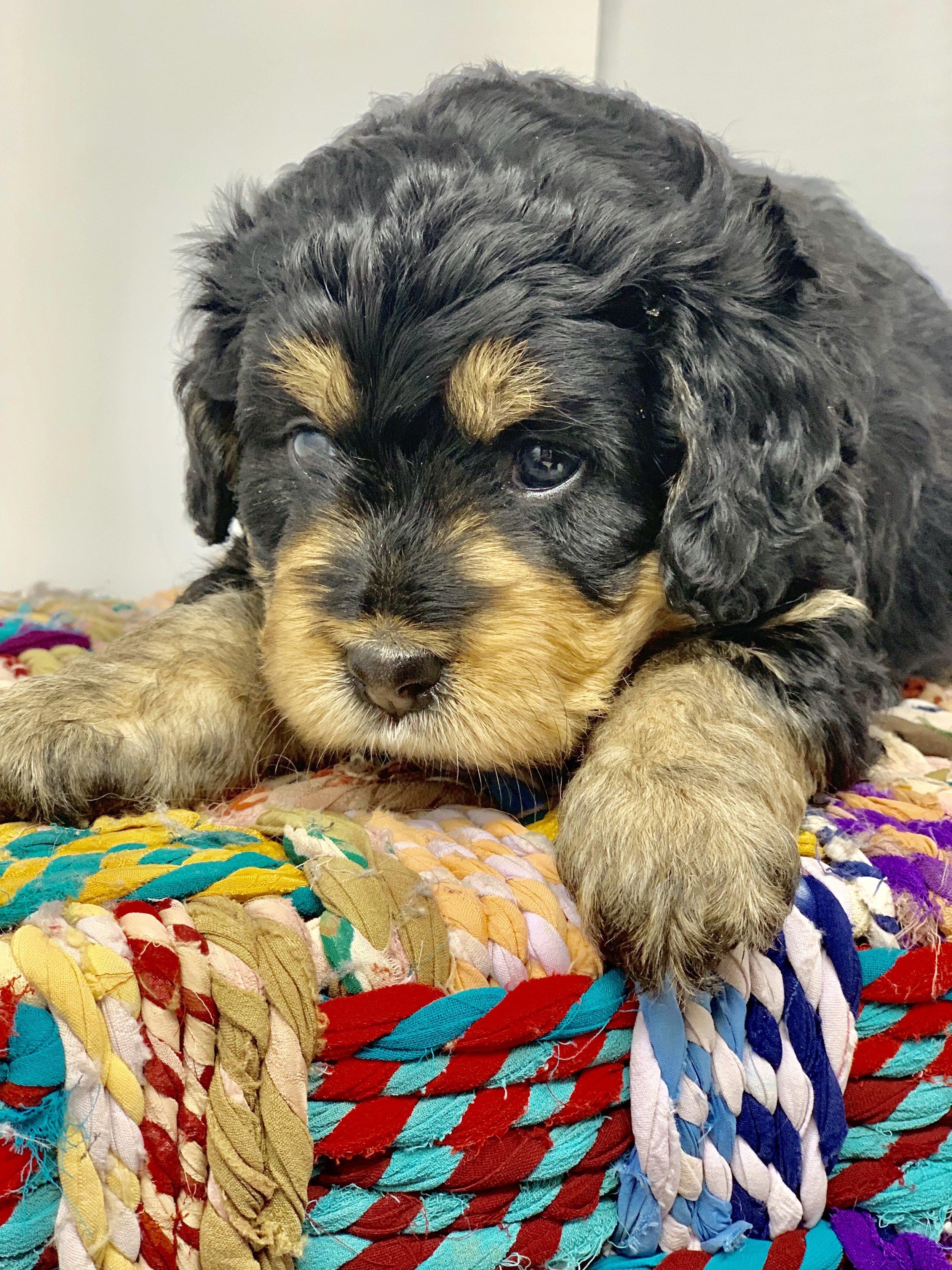 update puppy 3.jpg