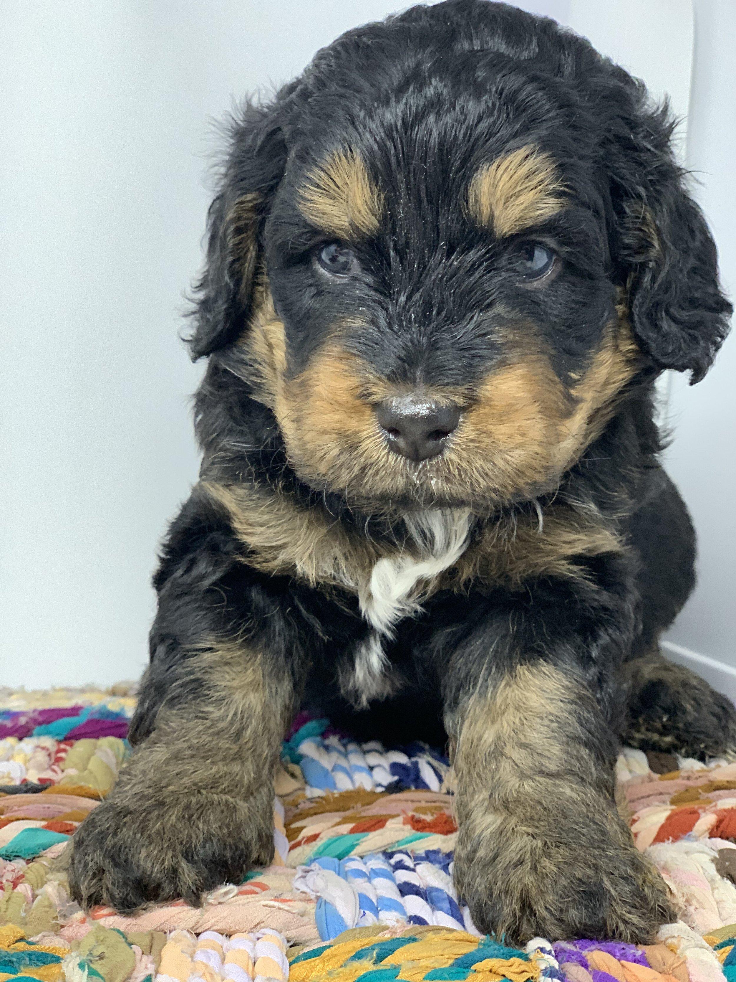 update puppy 4.jpg