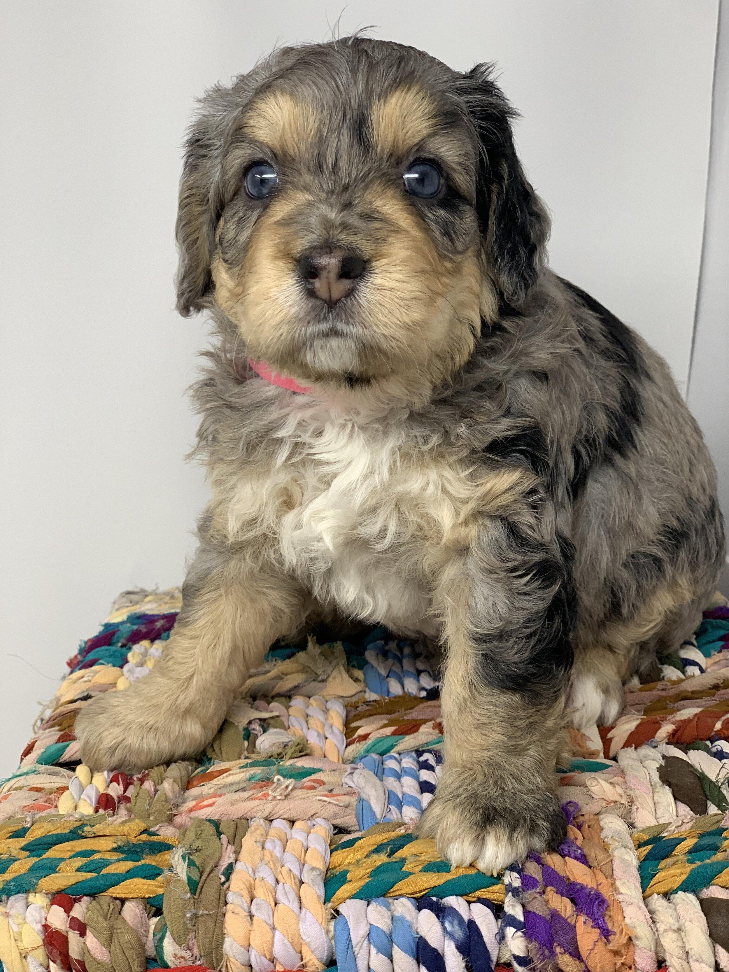update puppy 5.jpg
