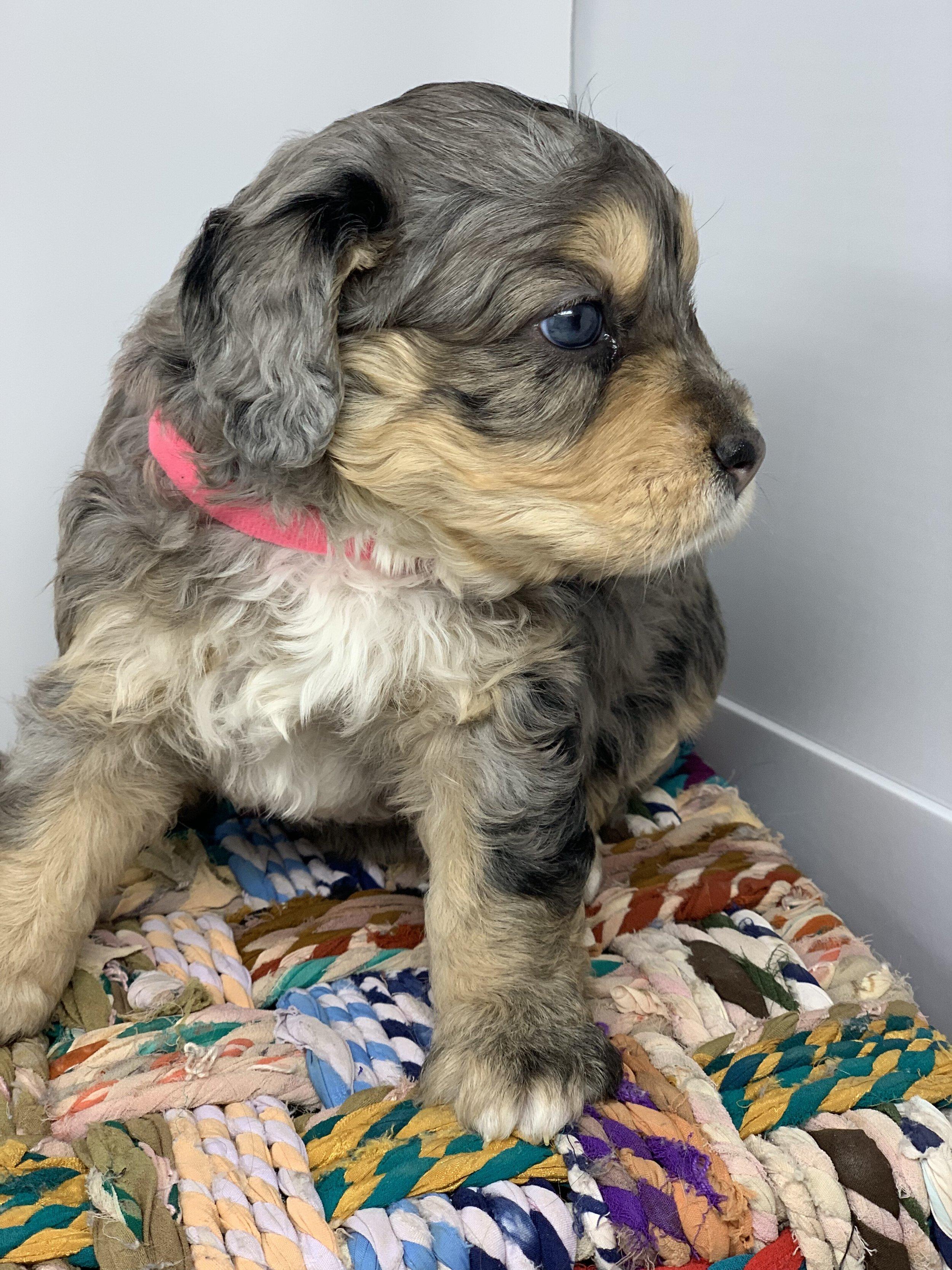 update puppy 6.jpg