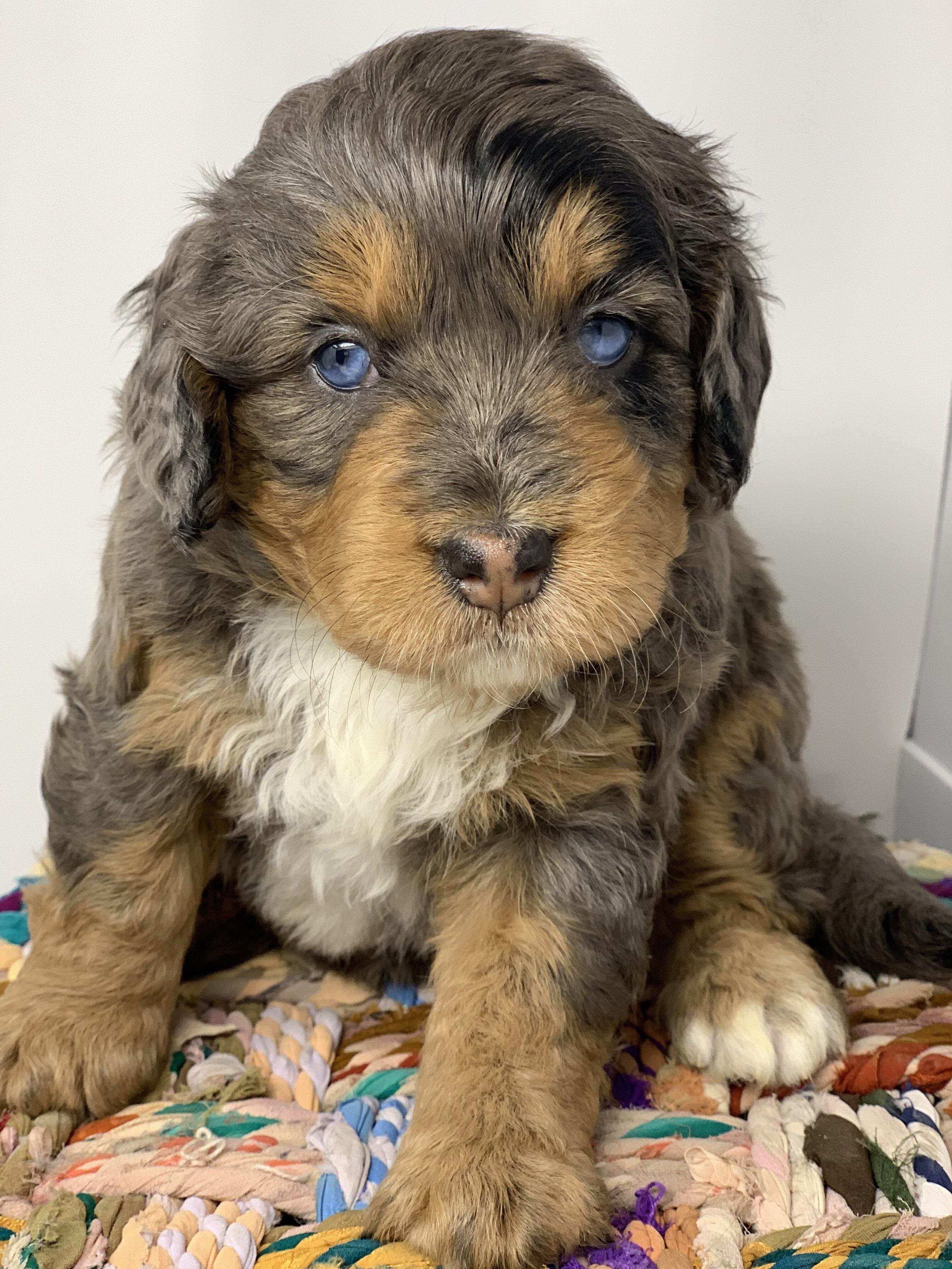 update puppy 7.jpg