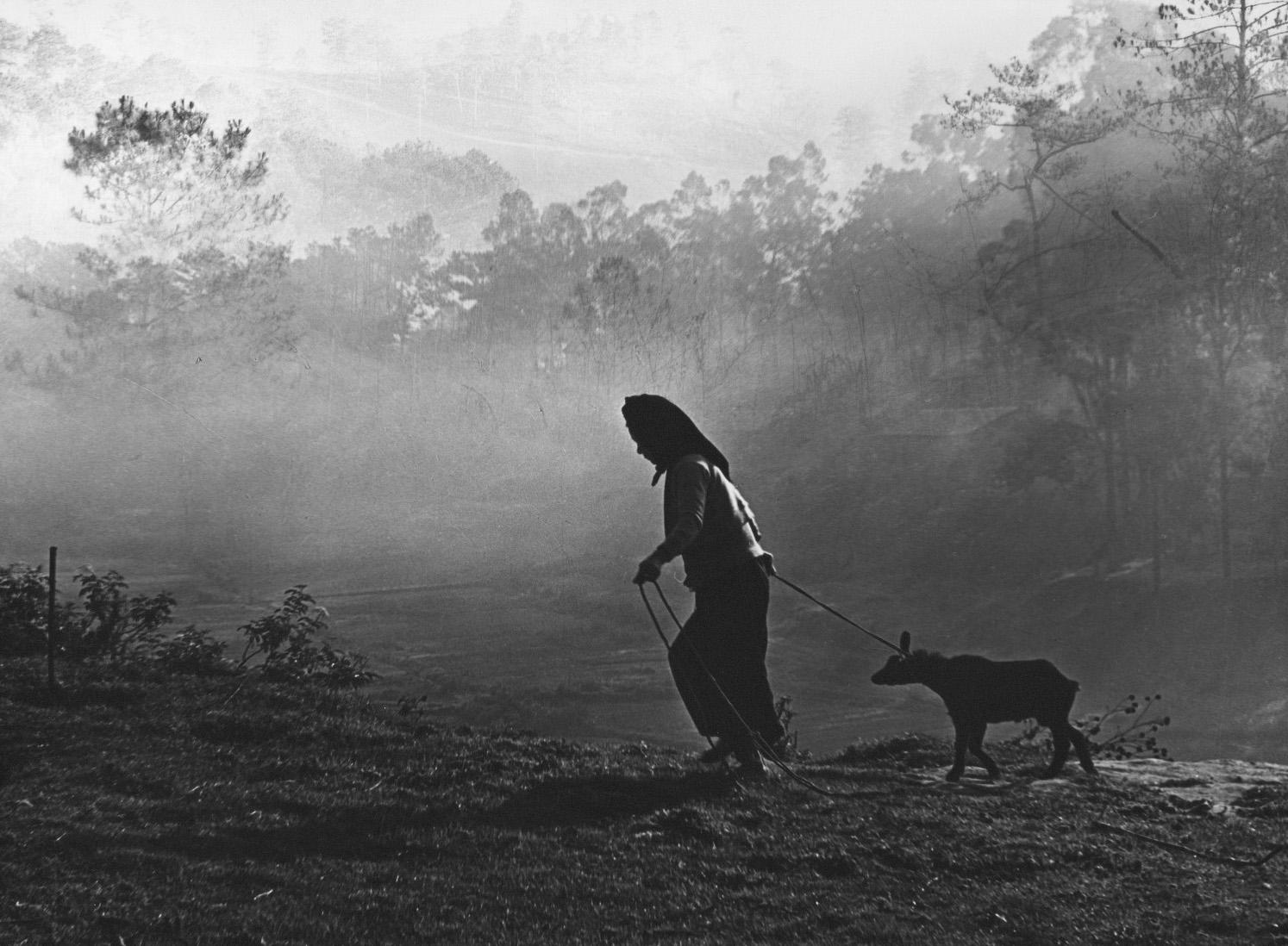 Winter Morning, Vietnam, 1965