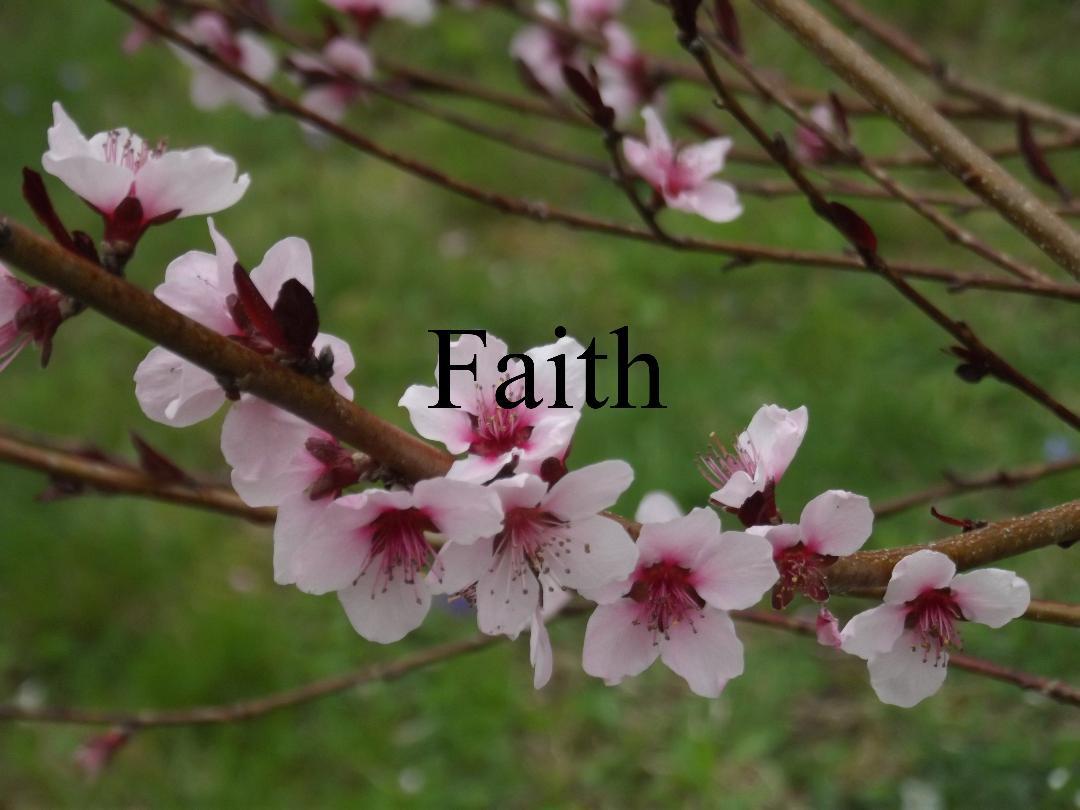 faith final final.jpg