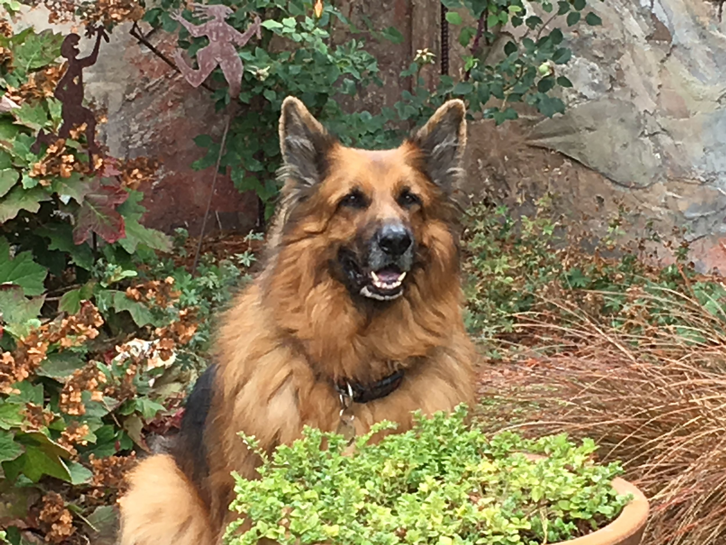 Rescue dog Anson loves his forever home and garden. ( Photo: Ed Reed )
