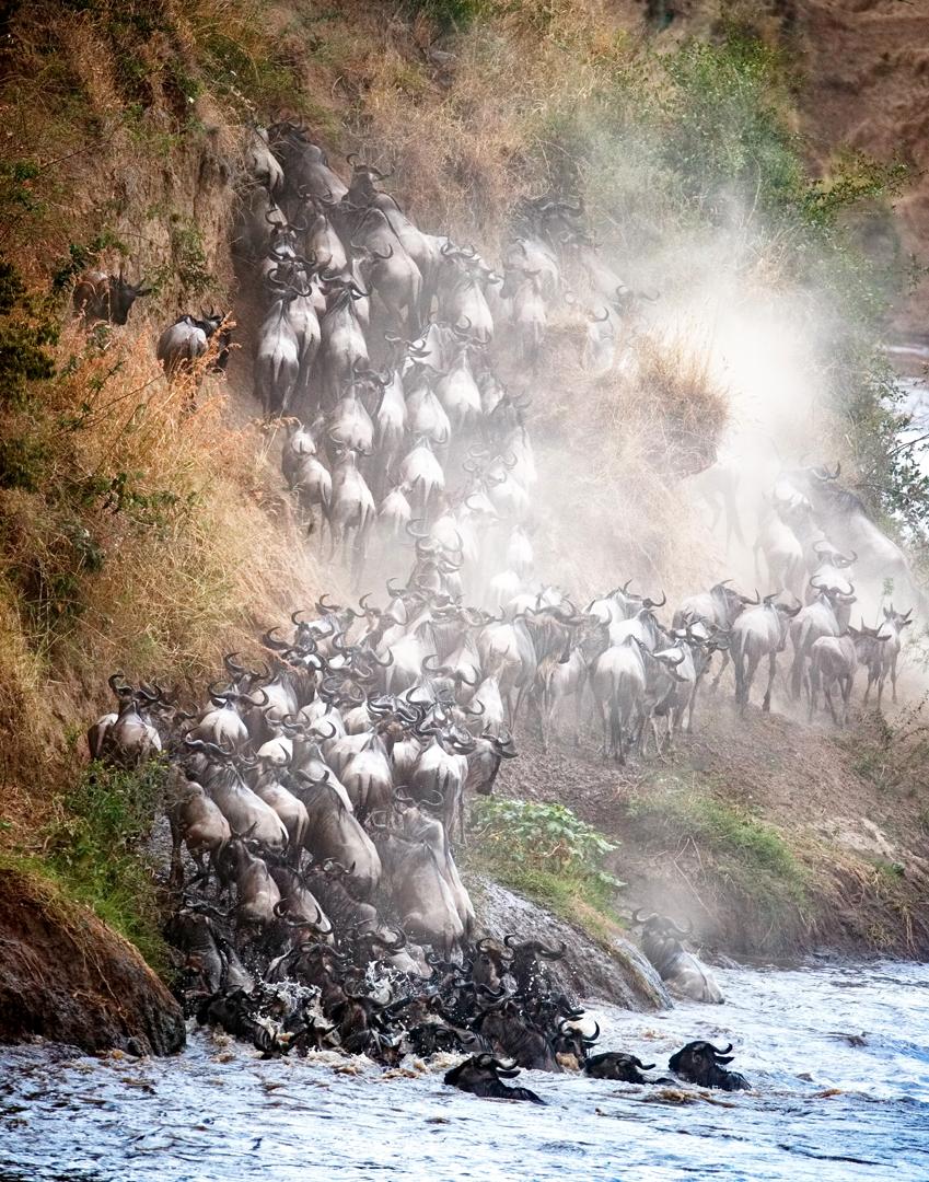 Wildebeest Climbing Up Mara River Bank.jpg