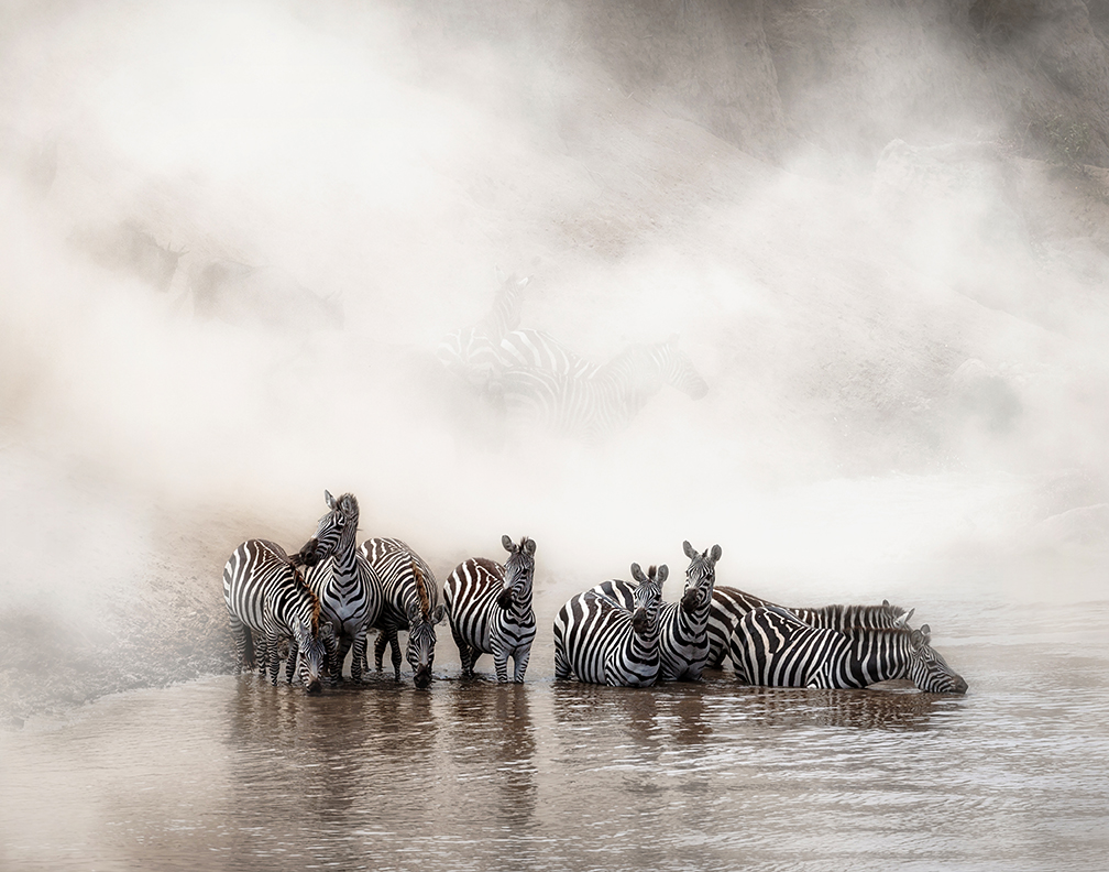 Zebra Drinking in the Mara.jpg