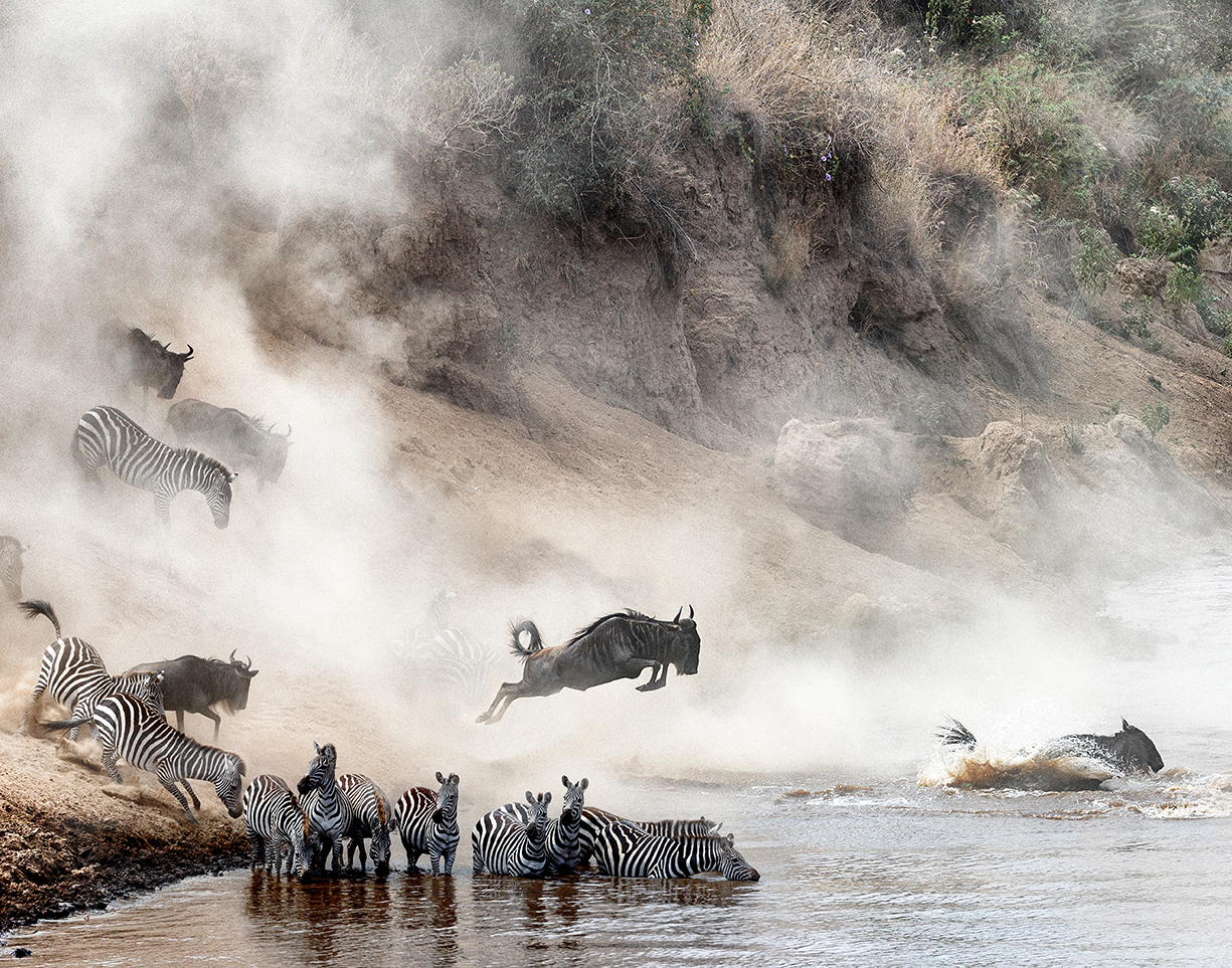 Wildebeest and Zebra Mara River Crossing.jpg