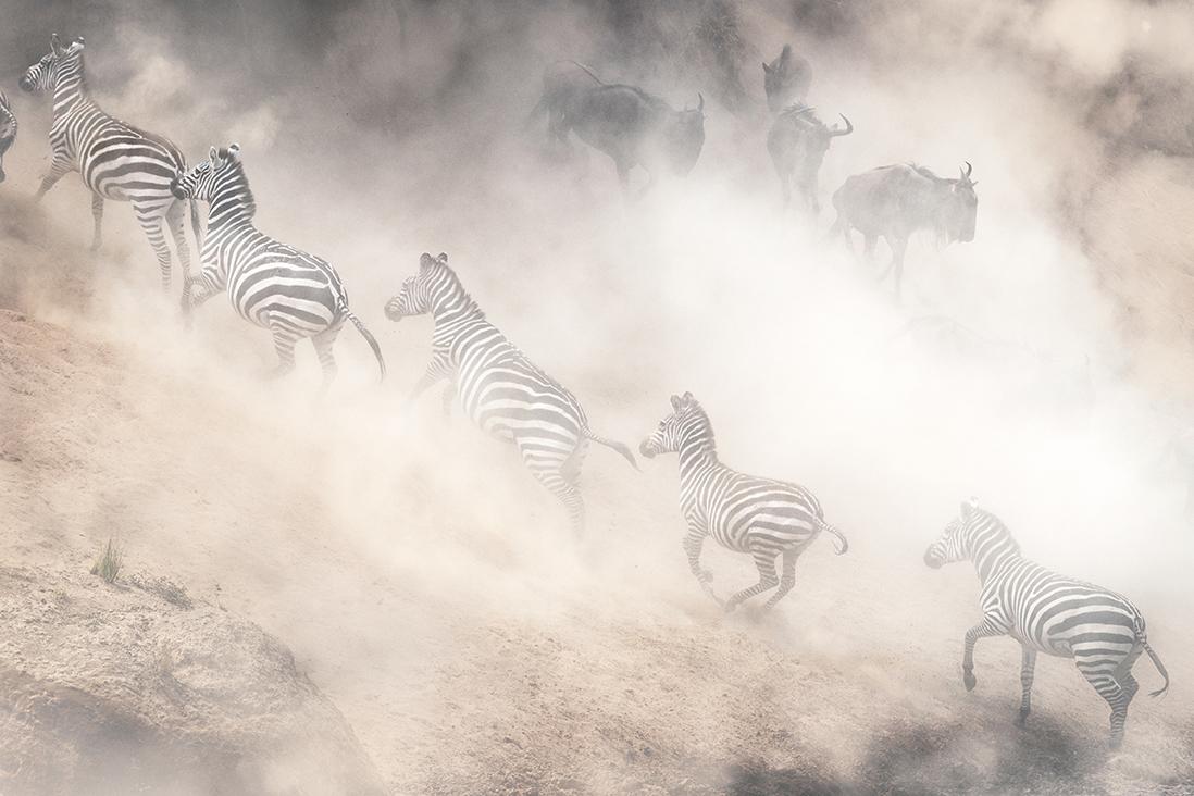 Dramatic Dusty Great Migration in Kenya.jpg
