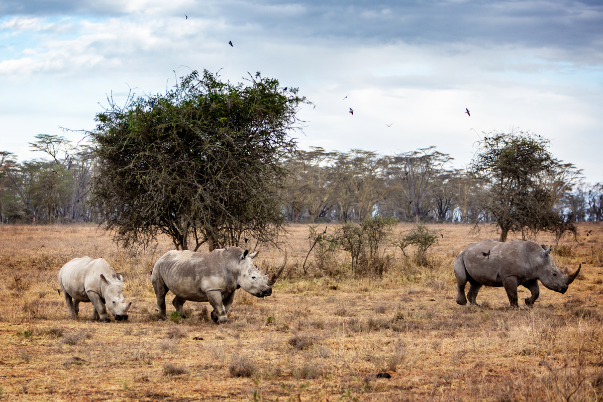 White Rhino Family in Lake Nakuru Africa.jpg