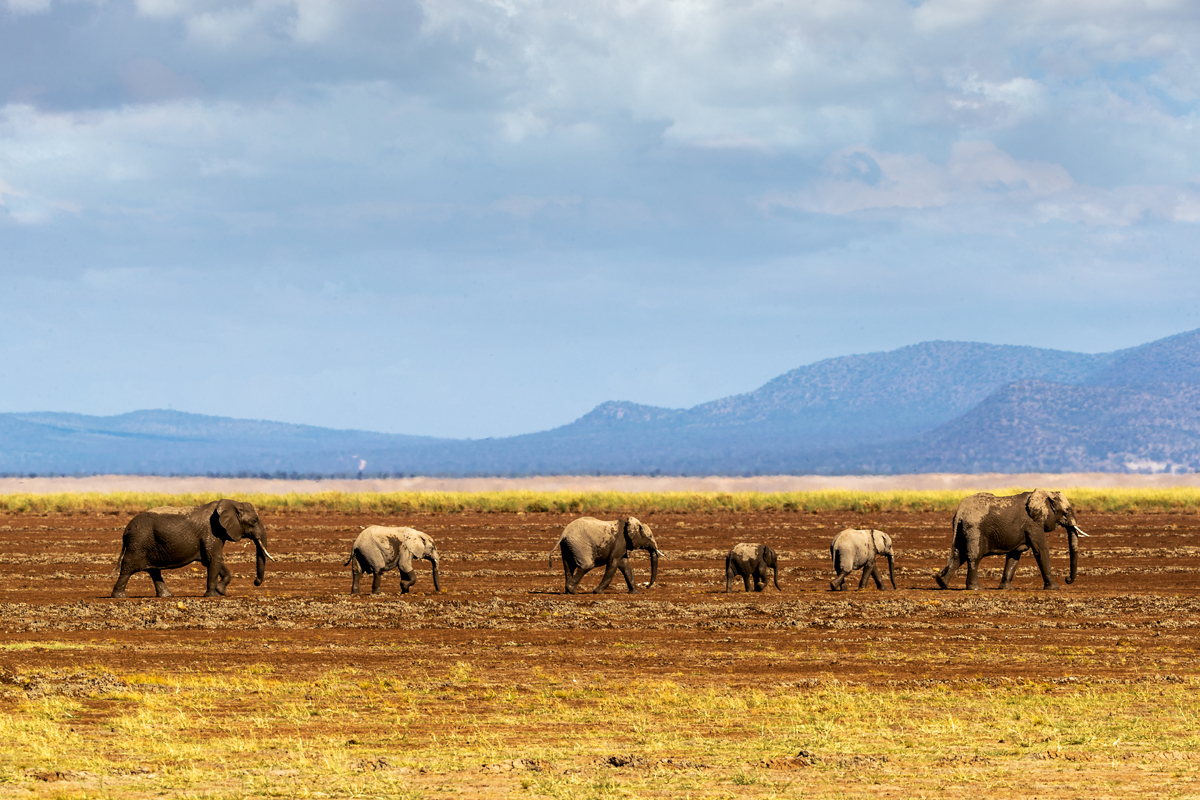 Row of Elephants Walking in Dried Lake.jpg