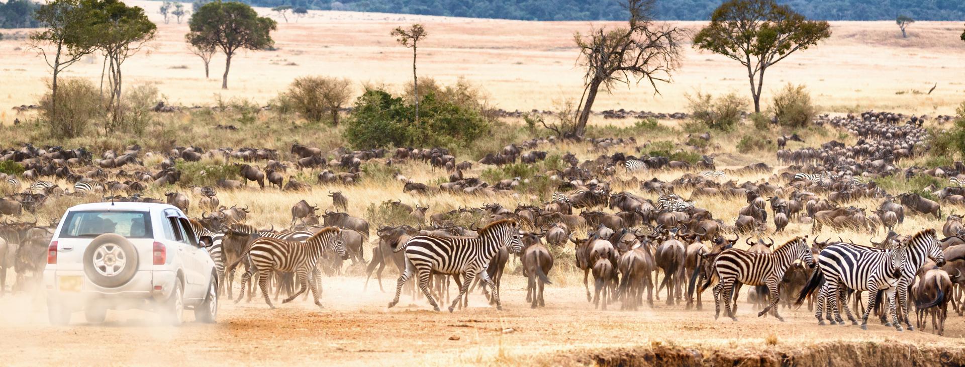African Safari Self Game Drive.jpg