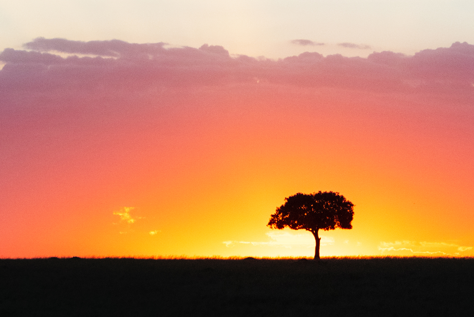 Solitary Tree Silhouette at Colorful African Sunset.jpg