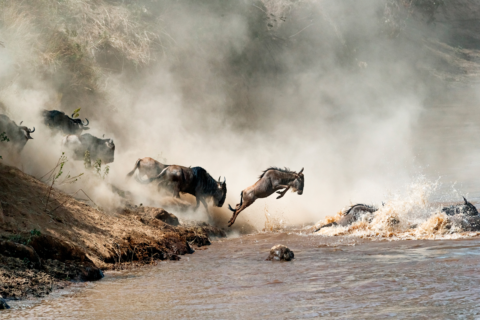 Wildebeest Leaping in Mid-Air Over Mara River.jpg