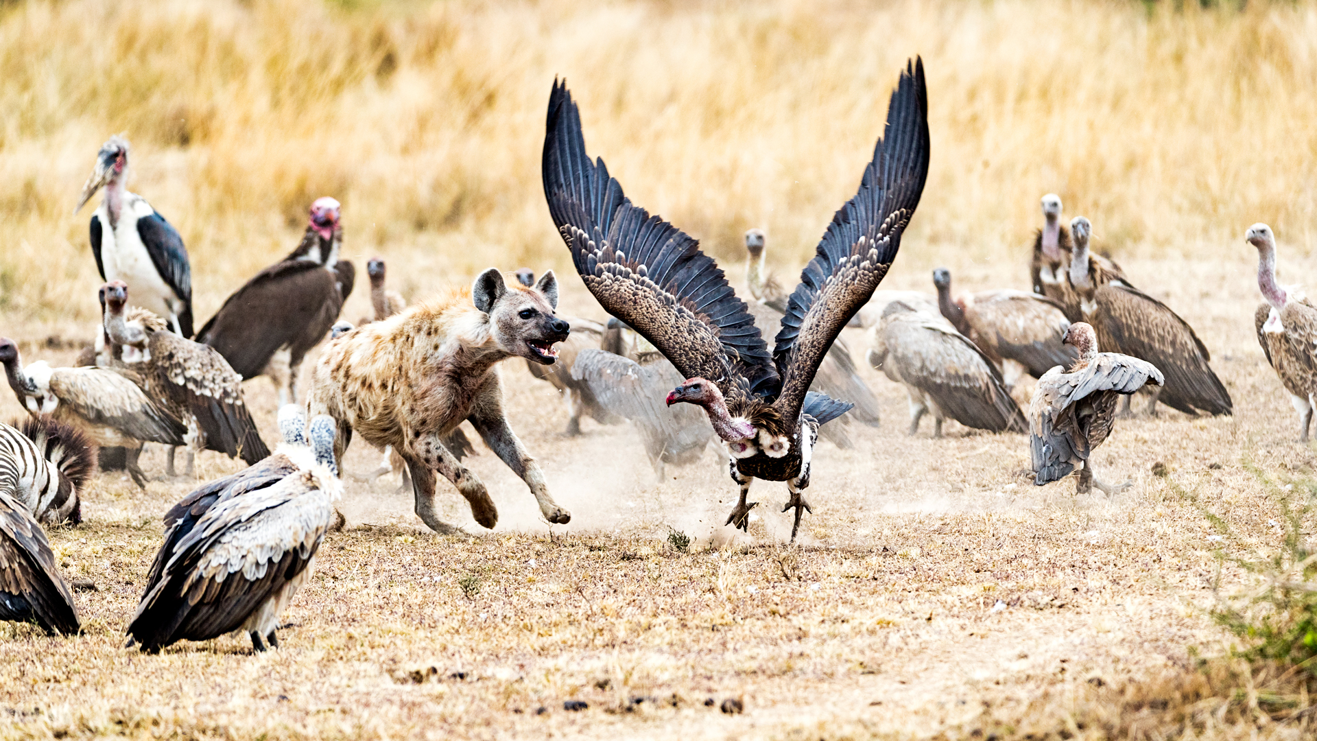 Scavengers in Kenya Africa.jpg
